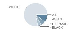 A E Angier School Student Race Distribution