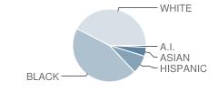 St. Louis Charter School Student Race Distribution
