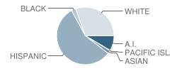 Charter Vocational High School Student Race Distribution