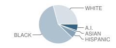 Meachem Elementary School Student Race Distribution